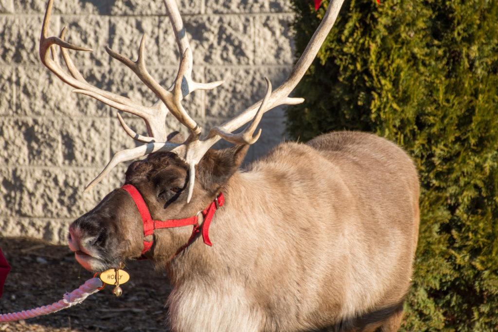 GTown Breakfast With Santa Reindeer